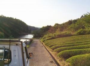 お茶摘み風景1